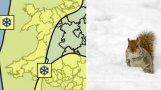 A weather map for Wales and a squirrel in the snow