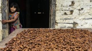 Menina ao lado de semenetes de cacau