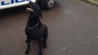 Ozzy the police dog