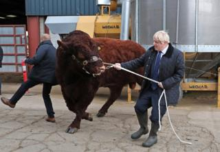 Boris Johnson wrestles with a bull