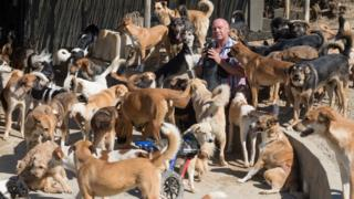 Karl Scarr and some of his dogs