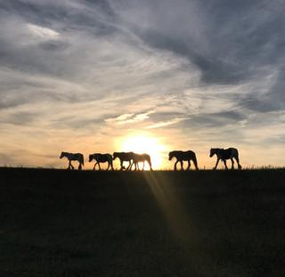 Silhouettes on horses