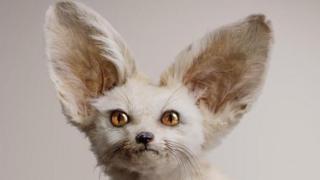 Criatura imaginaria del artista Vincent Fournier. White Fennec (Zerdas hypnoticus), tiene la habilidad de controlar la mente.