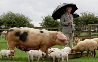 in_pictures Prince Charles looks at a pig with her piglets