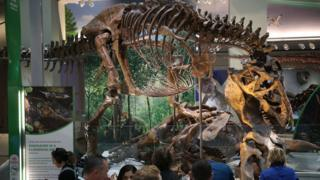 Tyrannosaurus Rex on display at Smithsonian June 2019