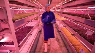 Подземная ферма