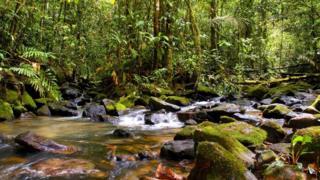 Reserva de Maicuru