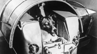Собака Лайка в космическйо капсуле