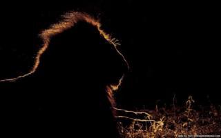अफ्रीका के जानवर
