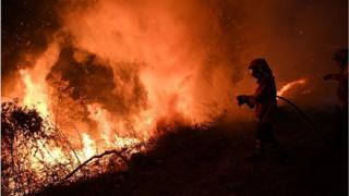Пожарные в лесу