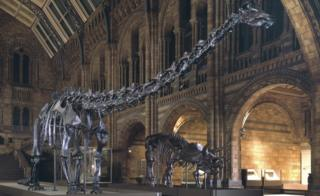 'Dippy' the dinosaur to go on display at National Museum in Cardiff
