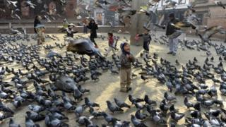 Anak-anak memberikan makanan kepada burung dara di Kathmandu, Nepal.