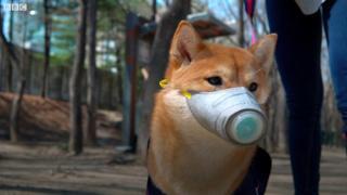 강아지 미세먼지 마스크