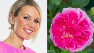 Dianne Oxberry and Florida Sunset rose
