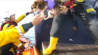 A dog being lifted off the M/Y Juliette