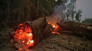 Forest burning.