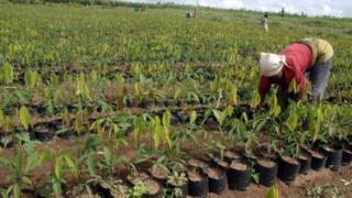 La zone UEMOA (Union économique et monétaire ouest-africaine) affiche quant à elle croissance solide de 6 % par an en moyenne, tirée par le secteur agricole et les services.