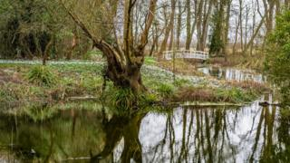 Snowdrops at Waterperry