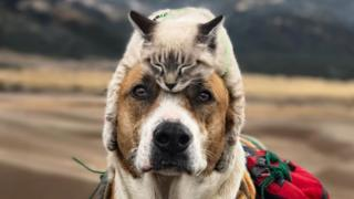 Cat asleep on top of dog's head, with dog looking into camera