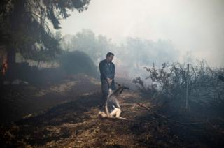 A farmer tries to save his goat during a forest fire in the village of Makrimalli on the island of Evia, northeast of Athens, on 14 August 2019.