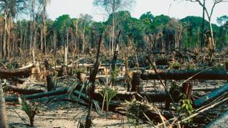 آمار تکاندهنده از نابودی جنگلهای آمازون