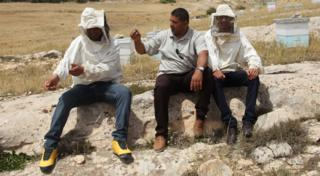 The first three beekeepers to take part in TuniBee. From left, Mohamed Jouini, Abdelfatteh Sayari, and Khairi Kharroubi
