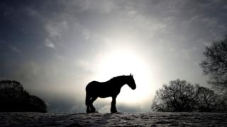 A horse, in silhouette, on snow-covered fields