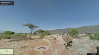 Elephant in Samburu park