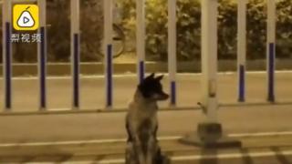 El perro en la carretera