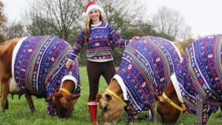 Becky Houzé and cows