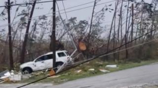 A car apparently crashed through trees that are twisted and bent in this photo