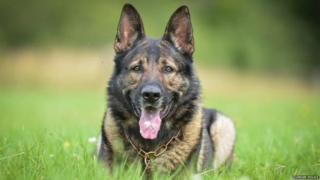 Durham police dog