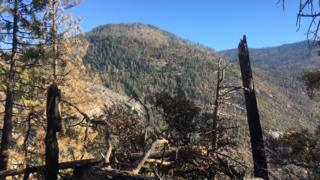Nhiều đoạn rừng trong thung lũng Yosemite đã cháy và đổ cây hoàn toàn