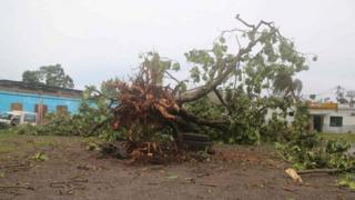 A large downed tree in Comoros