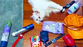 A cat lying down with household objects