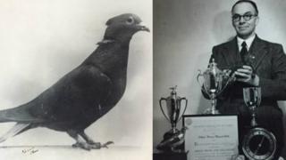 Почтовый голубь Мэри и ее хозяин