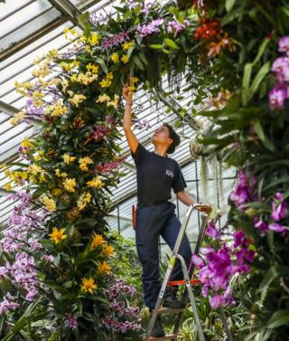 in_pictures Alice McKeever puts the finishing touches to some of the 5,000 colourful orchids on display