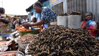 Les chenilles sont consommées dans plusieurs d'Afrique, dont la RDC.