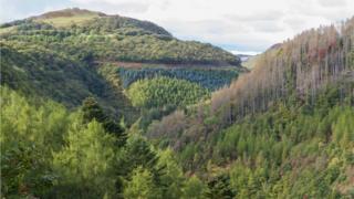 Coedwig yng Nghymru