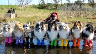 Kaylee Garrick photoshoot with dogs