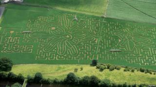 Bugs themed maze at Lakeland Maze Farm Park in Cumbria