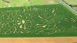 Maze in the shape of a bee and flowers at Hemsby Mega Maze in Norfolk