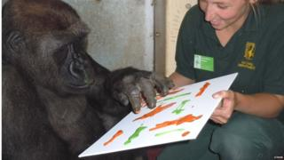 N'Dowe, the lowland gorilla, with zoo keeper Lorraine Miller.