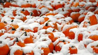 A pumpkin patch covered in snow in Portsmouth, New Hampshire.