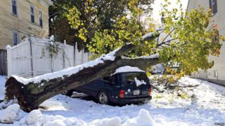 A large tree that's toppled on top of a car after early snowfall in Worcester, Massachusetts