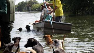 Soi Dog Foundation volunteers looking for stranded dogs.