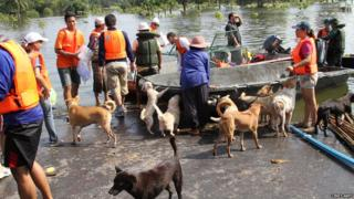 A team of volunteers comes back to dry land with rescued dogs.