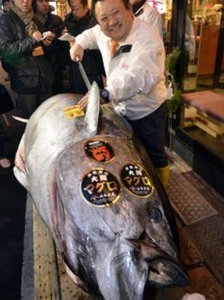 The giant fish weighed the same as nearly three grown men