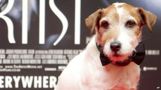 Uggie takes a bow as he arrives at the Golden Globes
