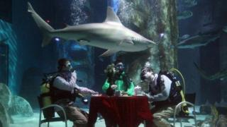 Shark tea party
